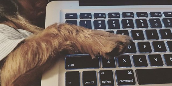 Trying to download music, but Beans has to have one paw on my computer when he sleeps! #yorkielove @crys_usita